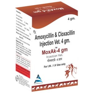 Amoxycilin & Cloxacilin Injection